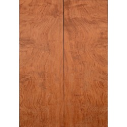 Top in Bubinga